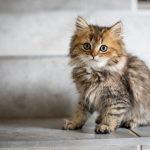 Pahami Bahasa Kucing, yuk!