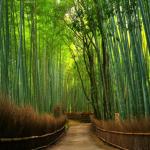 Ketahui Hal Ini Sebelum ke Bambu Keputih Surabaya