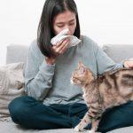 Hal-hal tentang Pet Allergy yang Perlu Diketahui
